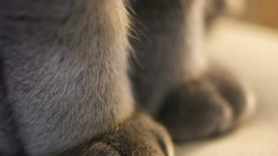Кошки топчут лапками