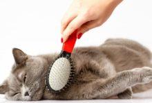 Как расчесать кошку