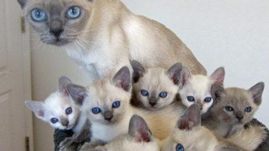 Мама кошка с котятами