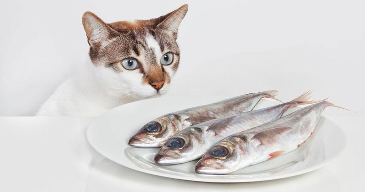 можно ли коту рыбу