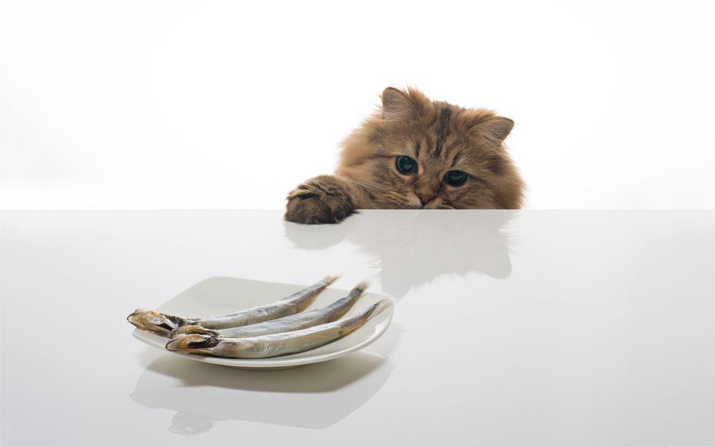 можно ли кормить котов рыбой