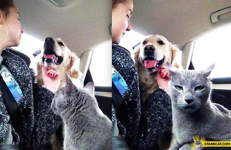 Кот ревнует к собаке