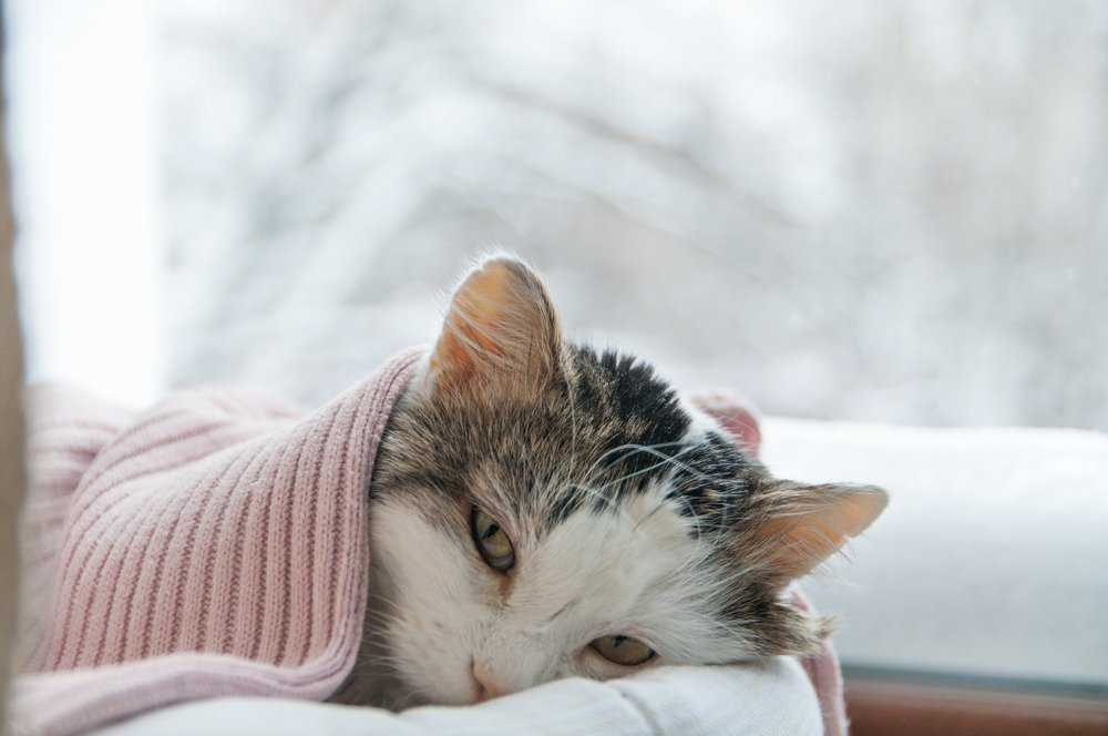 Кот болен