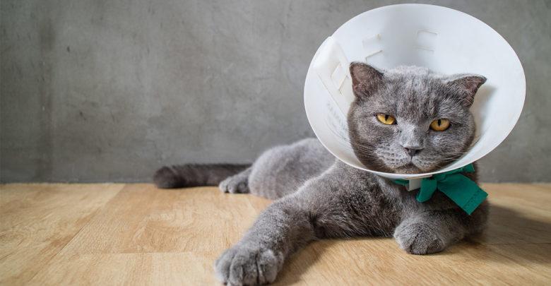 стерилизация кота