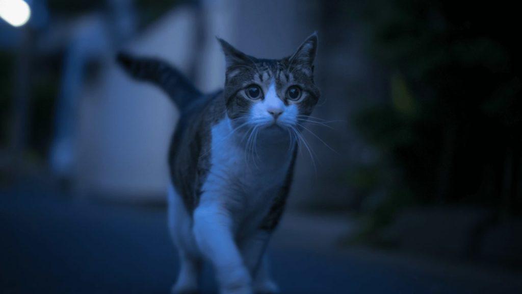 котенок в темноте