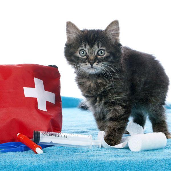 Аптечка для кота