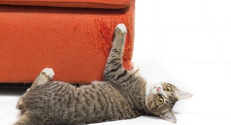 кот царапает мебель