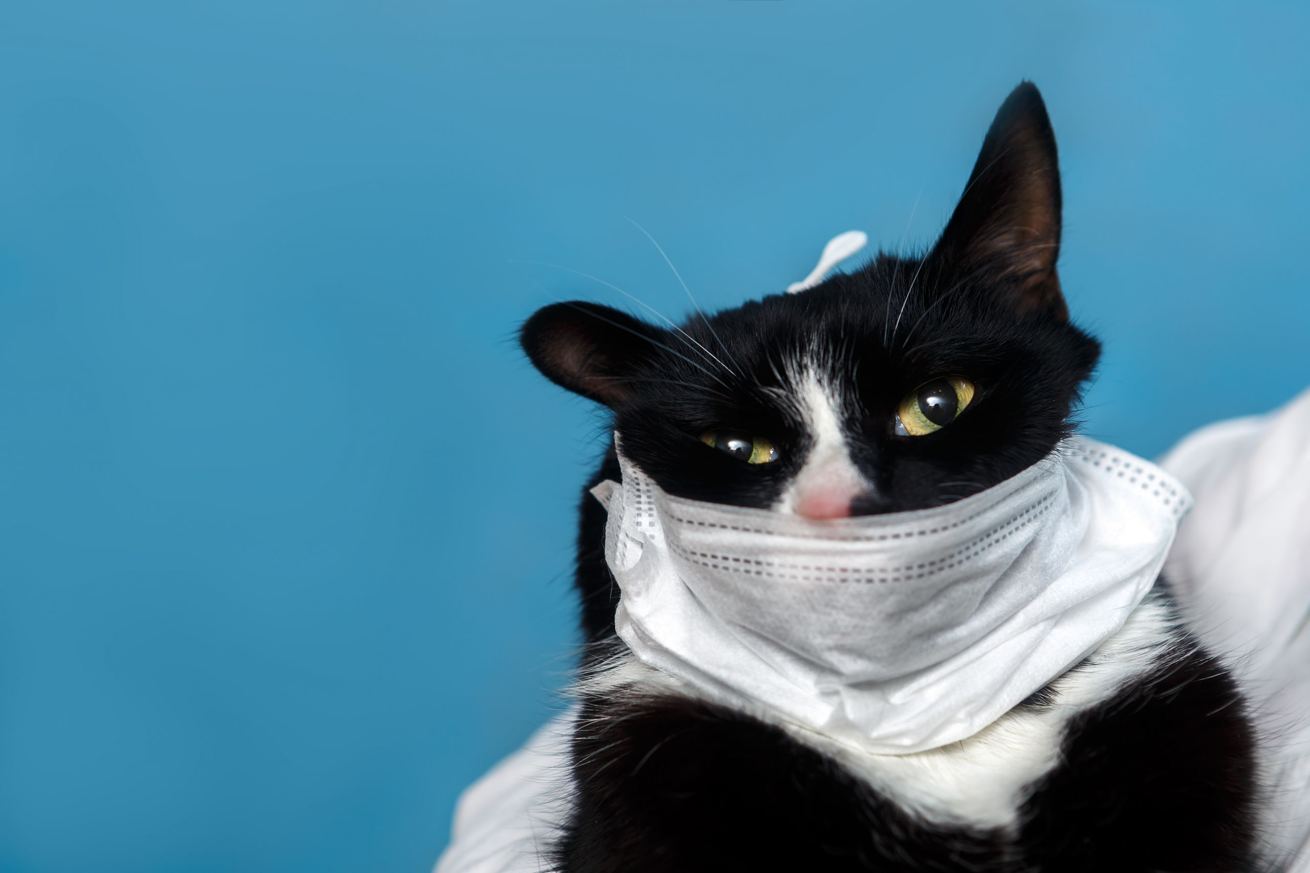 кот в маске
