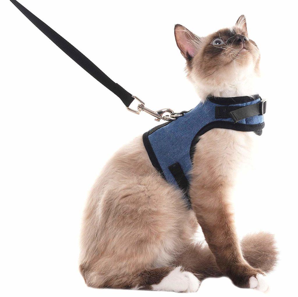 шлейка для кошек